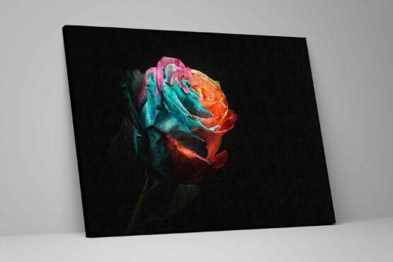 Tablou Rainbow Rose